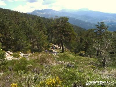 Peña Águila - DAS2015 - Federación Madrileña Montañismo; excursiones Madrid; senderistas;ruta s
